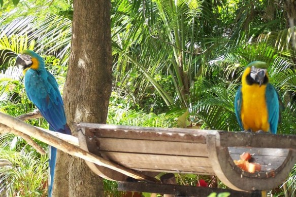 143 Macaws