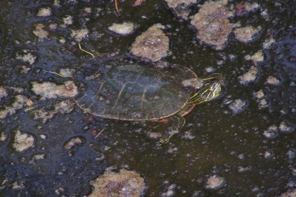 27 Turtle Pond